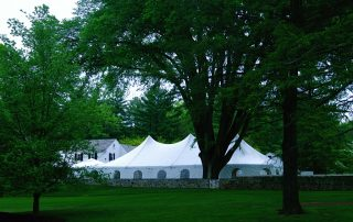 large tree next to tent